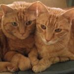 Reiki Cats: Hawayo and Takata