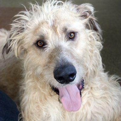 Reiki Rescue Dog Clancy