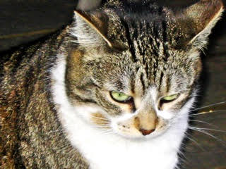 Reiki Cat