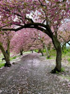 Nature and Reiki
