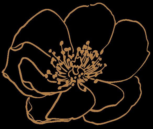 Flower Outlines, Reiki, Medicine and Self Care with Pamela Miles